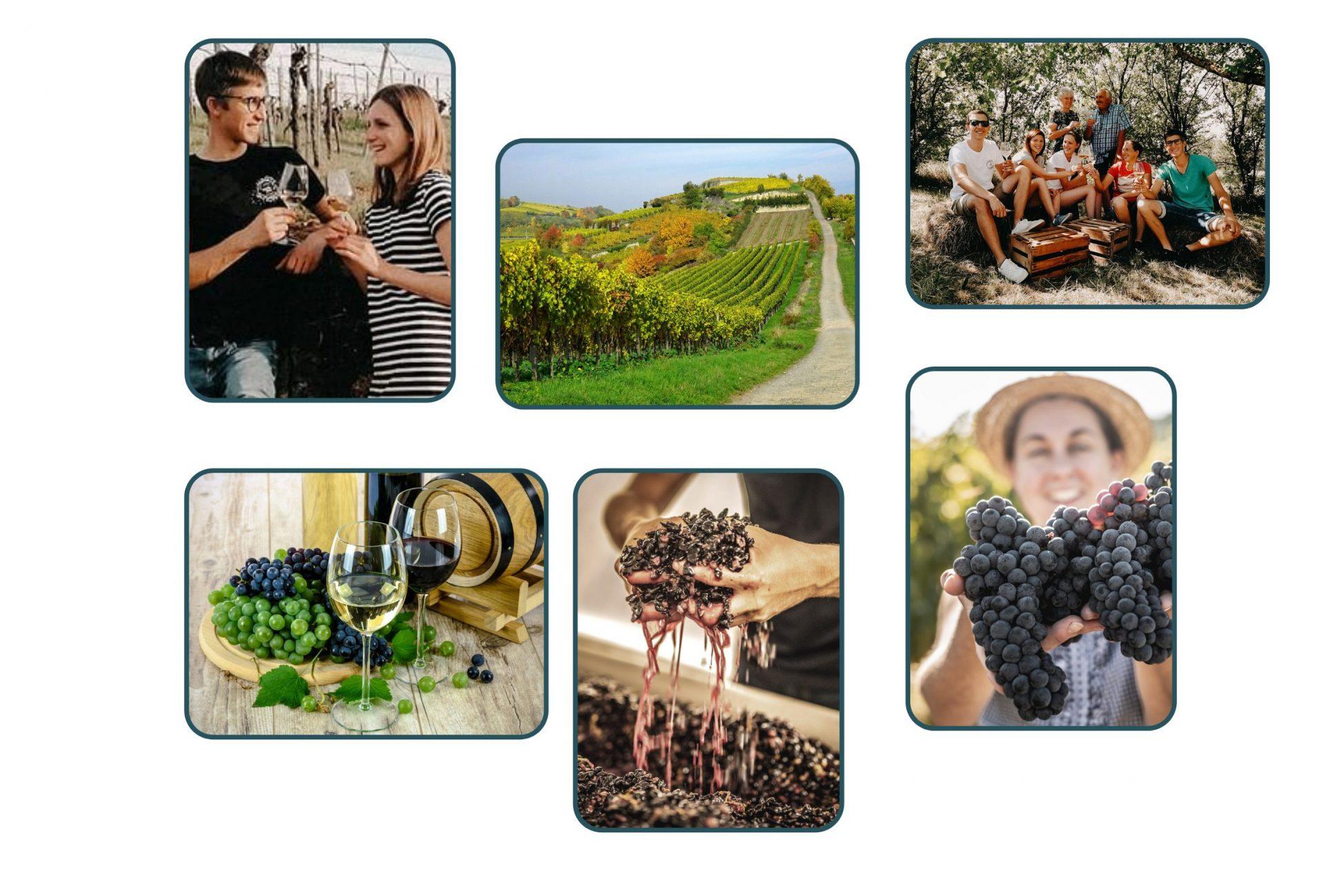 Collage von Weinproben